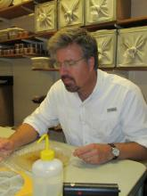 Dr. Stephen Dobson checking mosquito larva in his lab