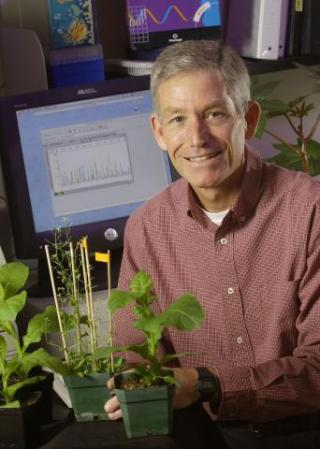 Dr. Joe Chappell working with plants in his lab.